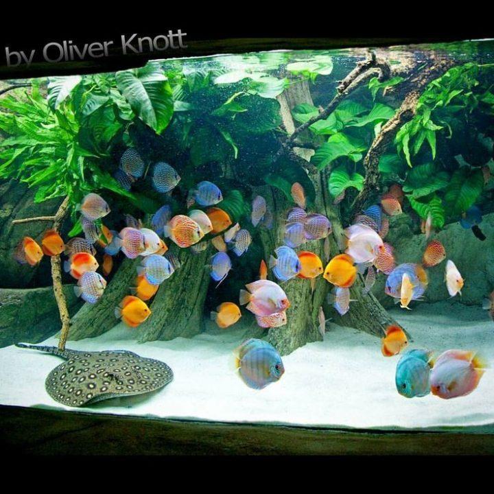 5,500 liters (Year 2015) Location: Kölle Zoo Karls | Gardens